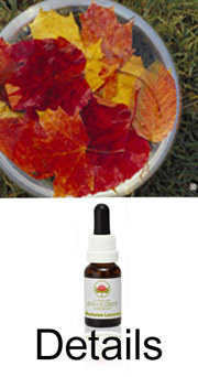 Autumn Leaves Australian Bush Flower Essences Ian White