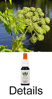ANGELICA Love Remedies Buschblüten