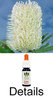 OLD MAN BANKSIA Australian Flower Essences Buschblüten