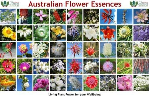 Poster of Love Remedies Australian flower essences