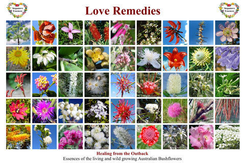 Buschblüten Poster Love Remedies