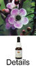 PEACH FLOWERED TEA TREE Australian Bush Flower Essences