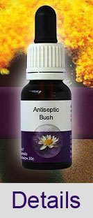 ANTISEPTIC BUSH Living Essences