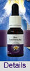 BLUE LESCHENAULTIA Living Essences