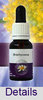 BRACHYCOME Living Essences