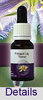 FRINGED LILY TWINER Living Essences