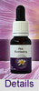 PINK EVERLASTING Living Essences Buschblüten