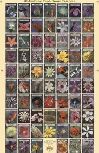 Australian Bush Flower Essences Poster
